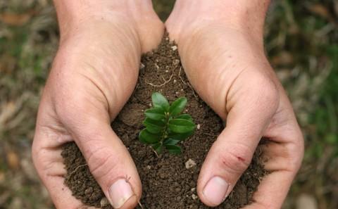 manos con plantita